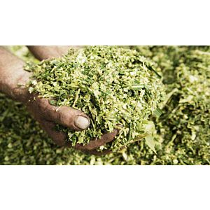 SILOSOLVE FC ECO, dodatak silaži za poboljšanu fermentaciju i aerobnu stabilnost, 200 g