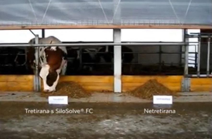 Silosolve – FC – kad bi krave mogle birati